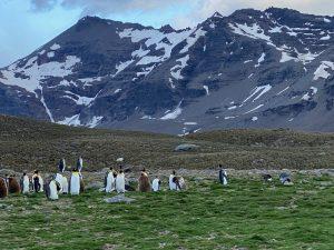 emporer penguins significance