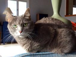 Cat rescues Pentz